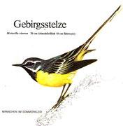 BiHU Vogelführer Natur Hergenrath Völkersberg Gebirgsstelze