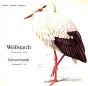 BiHU Vogelführer Natur Hergenrath Schwarzstorch