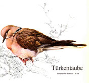 BiHU Vogelführer Natur Hergenrath Völkersberg Türkentaube