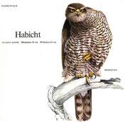 BiHU Vogelführer Natur Hergenrath Habicht