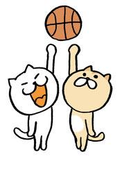 猫 バスケ