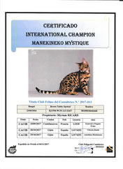 manekineko mystique championne internationale wcf