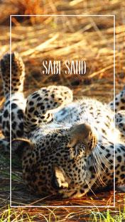 suedafrika-sabi-sand-safari