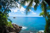 Meer, See, Palmen, Küste