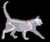 Vorteile orthopädisches Bett Katze