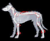 Vorteile orthopädisches Bett Hund