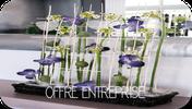 offre entreprise fleuriste perols fleurs