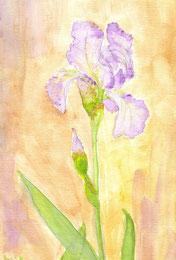 Grußkarte Schwertlilie Iris