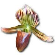 Orchidée 91
