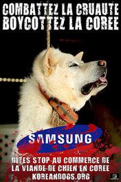 Chien pendu sur une affiche contre la cruauté animale en Corée