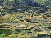 Vorinkaische Terassenfelder im Colca Tal