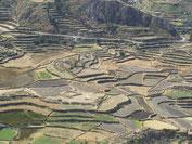 Inkaterassen im Colca Tal - Die tiefste Schlucht der Welt