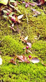 野の花を愛でる山野草大好き中津川の里山の美しい紅葉真っ盛り中津川付知峡周辺食事処和食処絶品ランチグルメ旅