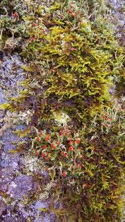 地衣類大好きコケ女中津川の里山の美しい紅葉真っ盛り中津川付知峡周辺食事処和食処絶品ランチ