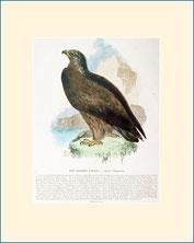 eagle, SPCK