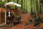 La Fageda esta a 4Kl de Olot. Hay excursiones en bici,caballos y carros.