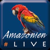 #AmazonienLive - Reisereportage aus Pará (Brasilien)