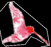kristinsart-yoga-kunst-kolibri2