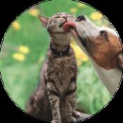Tierversicherung und Tierkrankenversicherung für Hund und Katze