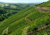 Foto: Schiller-Wine, Blog