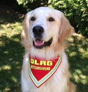 DLRG Hundehalstuch, Rettungshund