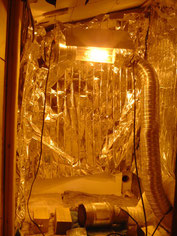 Indoor Growroom vorbereiten, Cannabis Anbau, Hanfanbau