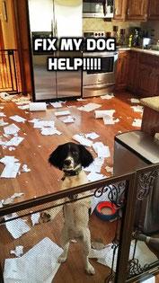 NJ Dog Trainer