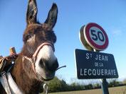 Normandie, Pont-audemer, location, vacances, ane, ballade