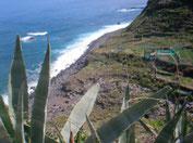 Blick durch eine Agave auf den felsigen Küstenstreifen.