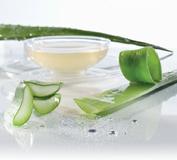 L'Aloe vera contient plus 20 sels minéraux