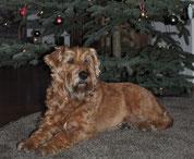 """Weihnachtsteddy"" ;-) Cooper (Conrí)"