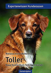 Toller - Nova Scotia Duck Tolling Retriever - Expertenwissen Hunderassen