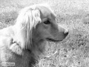 Novalischka, der Findelhund