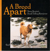A breed apart  Nova Scotia's Duck Tolling Retriever
