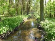 Bach in einem Wald. Sonnenlicht, das durch die Bäume scheint, spiegelt sich im Wasser