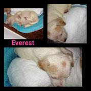 Everest - Reg. Lanusei - ca. 05/2020