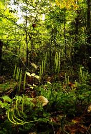 きのこ山の美しい森