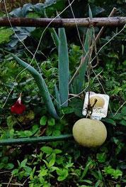美菜ガルテンふるかわ 無肥料無農薬で野菜を育てるきみこの菜園日記 晴耕雨読田舎暮らしの自然菜園がしたい!