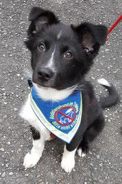 Assistenzhund, im Training, Halstuch, Hunde, bestickt