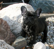 Quincey my little w. goblin