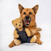 Franziska Spohn Fotografie, Tierfotografie, Hundeshooting, Indoorshooting, deutscher Schäferhund mit Teddy