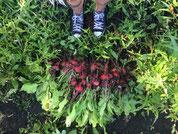 Notre récolte aux jardins de Brother Nature