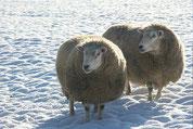 Wohl-wollige Wintertage