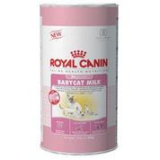 Leche de Gato, Royal Canin