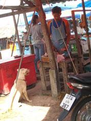 Dog at the market