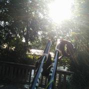 Nordic Walking Stöcke lehnen an einer Holzbrücke