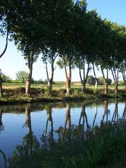 platanes du canal
