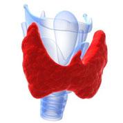 Schilddrüsen Unterfunktion