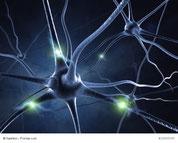 Unser Nervensystem
