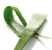 La pulpe ou gel d'Aloe vera est particulièrement riche en éléments sutritifs